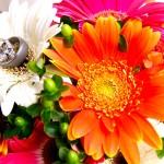 foto boda de anillos sobre flores